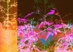 Kaleidoscope Silhouette of foliage Digital art by Rheta-Mari Kotze Great Artists, Fine Art Prints, Digital Art, Greeting Cards, Tapestry, Silhouette, Poster, Photography, Painting