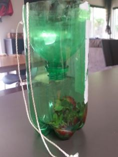 Homemade Fly Traps On Pinterest Fly Traps Fruit Fly