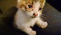Kitten Asks Man to Be Her Family After He Saved Her from Being Run Over by Traffic