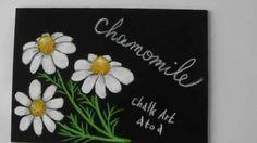 黒板にチョークアート、癒し効果のあるカモミールの描き方( Chalk Art drawing chamomile )