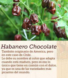 #habanero #pimientos #peppers #cocinasdelmundo #comida