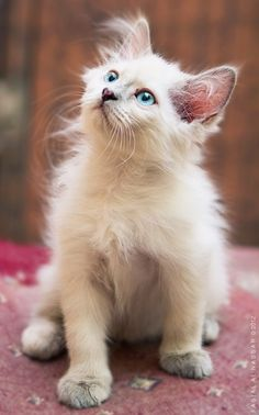 """""""I believe cats to be spirits come to earth.  A cat, I think, could walk on a cloud without coming through."""" --Jules Verne"""