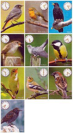 Backyard Birds, Bird Drawings, Science For Kids, Animals For Kids, Beautiful Birds, Garden Pots, Pets, Nature, Outdoor