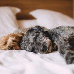 Is the expense of pet health insurance a moral dilemma?  Human health care is not at all amusing. It feels further like an ..  http://www.dogisto.com/expense-pet-health-insurance-moral-dilemma/