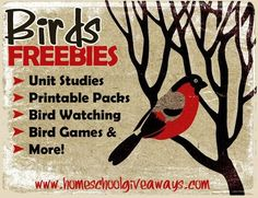 FREE Bird Resources for Nature Study | Homeschool Giveaways