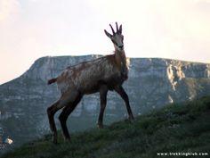 Clincea > < Hiking and caving photos Mountaineering, Wild Life, Trekking, Wilderness, Moose Art, Hiking, Europe, Adventure, Mountains