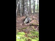 Le sol d'une forêt qui semble «respirer»