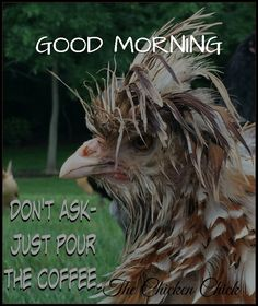 For all my coffee drinking friends . and all those who enjoy poking fun at coffee drinkers! Coffee Talk, Coffee Is Life, I Love Coffee, Coffee Break, My Coffee, Morning Coffee, Coffee Lovers, Drink Coffee, Funny Coffee