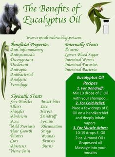Benefits of Eucalyptus | The Benefits of Eucalyptus Oil | Get Healthy