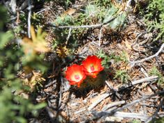 Dance of Life: Southern Colorado Wild Flowers