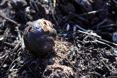 #macro #burned #snail #shell