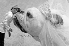 Funny Dog Photo  English Bulldog kissing a by PiperStoneArtwork, $8.00