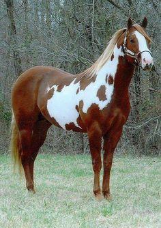 So beautiful horse