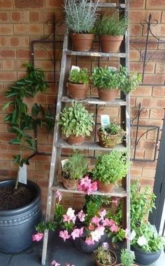 Kreative Idee: Diy Brown Alte Gartenleiter aus Holz mit Creative Idea: Diy Brown Old wooden garden ladder with …, Small Courtyard Gardens, Small Courtyards, Small Gardens, Vertical Gardens, Rustic Gardens, Apartment Balcony Garden, Balcony Plants, Apartment Plants, Balcony Flowers