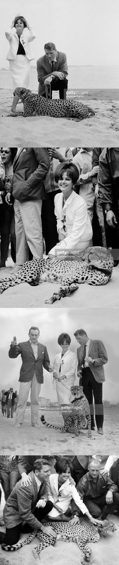 Actress Claudia Cardinale at Cannes Film Festival for the presentation of Luchino Visconti's movie 'The Leopard' with Burt Lancaster on May 21, 1963 in Cannes, France.