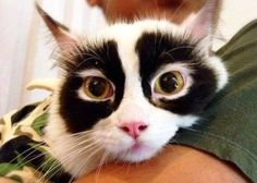 I am not a raccoon! - Imgur