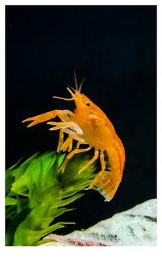Mr. Crabs Crabs, Fish, Pets, Animals, Animals And Pets, Animales, Animaux, Animal, Animais