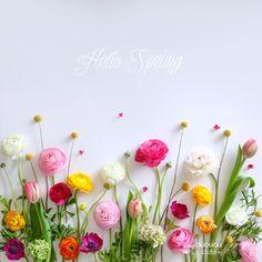 ❀ ✿ Hello Spring!! ❀ ✿
