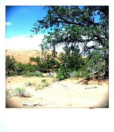 Off the trail, resting in a secluded area in Arches National Park Discovery, Trail, National Parks, Arches, Water, Artist, Plants, Writing, Bows