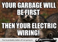 Evil Plotting Raccoon: Your garbage will be first...