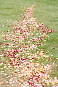 colour with rose petals Photography Simon Darby Something Blue, Here Comes The Bride, Rose Petals, Bloom, Colour, Weddings, Photography, Color, Photograph