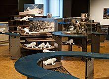 Zoologische Museum Zurich