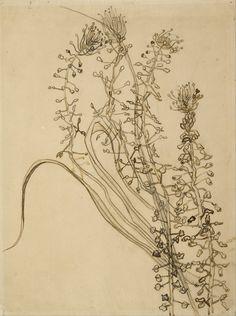 Tassel hyancinth, 1889, Vincent van Gogh