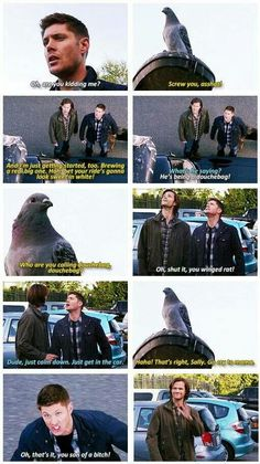 Dean vs pigeon