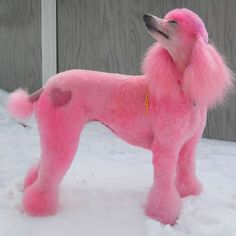 Tillie at Dogsey.com This is a perfect pink poodle, even  has a heart design   on it's bottom!  She's GORGEOUS!