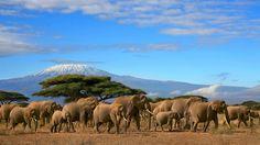 magnifique troupeau d'éléphants Wallpaper