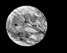 Full Moon Photo Moon Picture Bird Picture Moon and by JanelleTweed