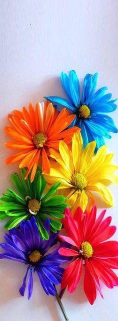 - colors 。\|/ 。☆ ♥♥ »✿❤❤✿« ☆ ☆ ◦ ● ◦ ჱ ܓ ჱ ᴀ ρᴇᴀcᴇғυʟ ρᴀʀᴀᴅısᴇ ჱ ܓ ჱ ✿⊱╮ ♡ ❊ ** Buona giornata ** ❊ ~ ❤✿❤ ♫ ♥ X ღɱɧღ ❤ ~ Th 02nd April 2015