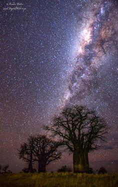 Baobab Milkyway by Hendri Venter