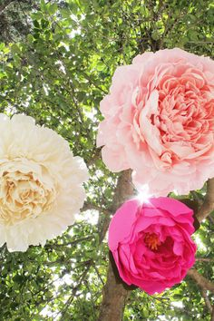 DIY giant paper peony decorations.