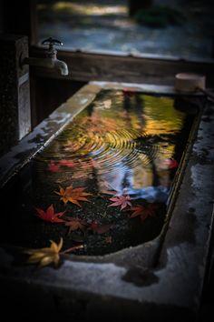 Autumn in Japan by aniki03 さん