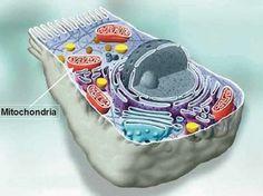 Znanstvenici pronašli lijek protiv raka ali nikoga za to nije briga! Muscular Dystrophies, Lyme Disease, The Cure, Ali, Nerdy, Muscle, Science, Type, Health