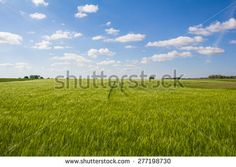 #Beautiful #Landscape #Green #Barley #Blue #Sky At #Bike #Path #Lake #Neusiedl In #Oggau #Austria @shutterstock #shutterstock #nature #landscape #summer #season #spring #colorful #beautiful #holidays #vacation #travel #sightseeing #burgenland #stock #photo #portfolio #download #hires #royaltyfree