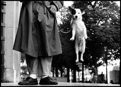 Paris, France, 1989; photo by Elliott Erwitt