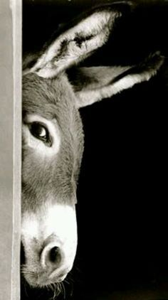 Don't give up when they shovel #dirt on you.  Take another step up like this very #clever #donkey.  Pinterest by Logan O'Brien
