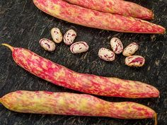 These beautiful beans are a sensation at the farmers market and with local-food chefs. Grown primarily for the stunning pink and white seeds, which make superior shell beans. Can be used as a snap bean, as well. Straight, round pods splashed in red. Growing Vegetables, Fruits And Veggies, Plants For Raised Beds, Garden Catalogs, Bush Beans, Farmers Market, Garden Inspiration, Seeds, Beanie