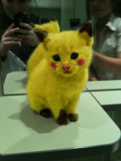 Aww, not into cats by how cute would it be to dress your cat as pikachu for Halloween?