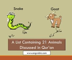 21 Animals Mentioned in Quran Animals Name List, Learning Arabic, Holy Quran, Dog Names, Pet Birds, Holi, Verses, Insects, Lion