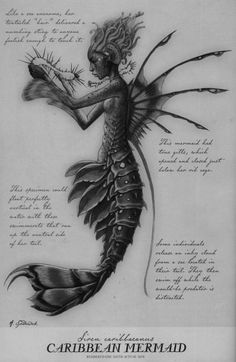 "Arthur Spiderwick - Merfolk, ""Field Guide to the Fantastical World around You"", 2005.  Merfolk are legendary aquatic creatures with the head and upper body of a human and the tail of a fish. As stunningly gorgeous as they are dangerous, merfolk live..."