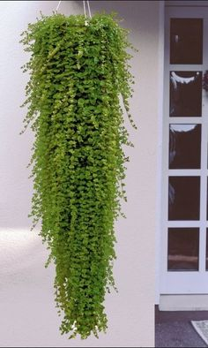 Pin by Harriet Owens on Plants Indoor Plant Wall, Indoor Garden, Indoor Plants, Outdoor Gardens, Outdoor Landscaping, Hanging Flower Baskets, Hanging Plants, House Plants Decor, Plant Decor