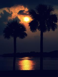✯ Sunset Palms