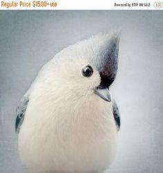 Bird Photography Nursery Art Cute Animal by RockyTopPrintShop
