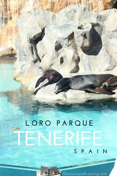 Loro Parque in Tenerife in the Canary Islands, Spain is an unforgettable experience! FlavoursandFrosting.com