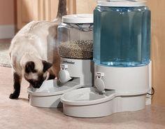 Миски для кошек: Как выбрать посуду для кошачьего стола Смотри больше http://kot-pes.com/miski-dlya-koshek/