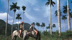 5 #fotos que te harán amar a #Viñales #cuba http://www.cubanos.guru/5-fotos-que-te-haran-amar-a-vinales/