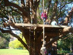 Treehouse Platform. Side of house. grouped maple. Base/landing tree zipline